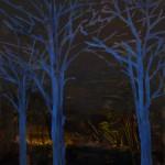 Ralph Kull, drei Bäume, 2016